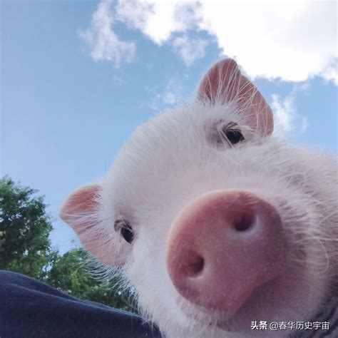 信仰伊斯兰教,不准养猪吃猪肉的任性明朝皇帝,究竟是为什么