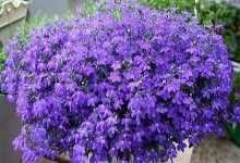春天开什么花什么颜色(揭晓春天开的花品种)