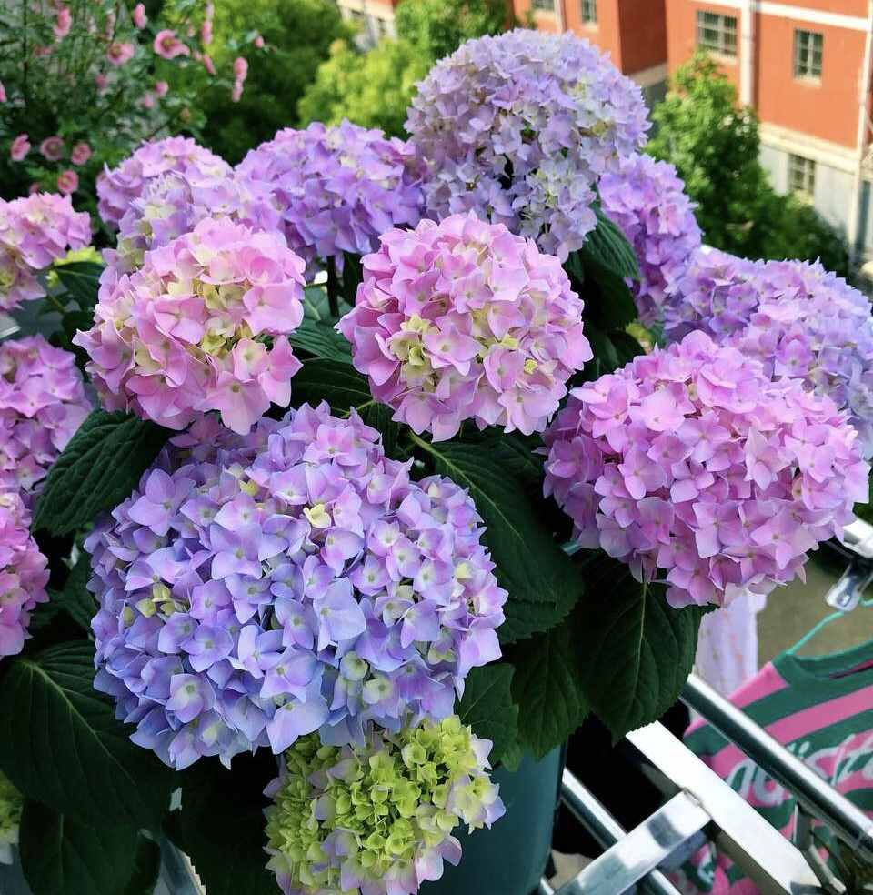 """夏天最受欢迎的6种花,花朵就像""""大包子"""",个个都是高颜值"""