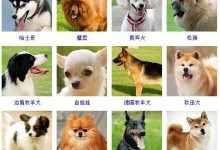 狗的种类图片大全及图片(史上最全的各种类狗及配
