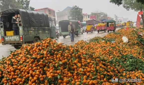 农产品滞销的本质是什么?为何今年常有一些农产品滞销?