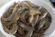 2020年怎么做虾好吃又简单又好吃(营养且美味的5种虾