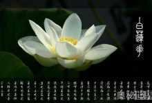 白莲花啥意思,下面就来认识一下白莲花是什么意思