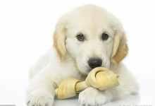 狗狗感冒了怎么办吃什么药(狗狗轻微感冒能自