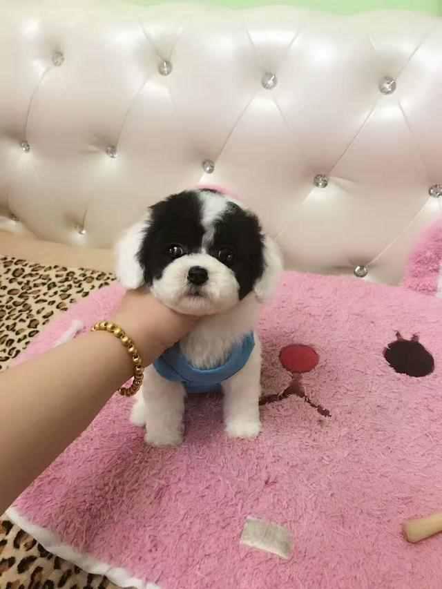 小狗从多大开始训练比较好?
