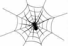 什么是网络蜘蛛,快来涨知识