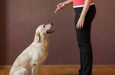 可以让狗狗开心的十二件事,相信你可以做到