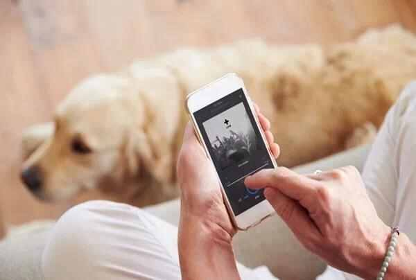 狗狗最喜欢什么音乐?音乐的各种神奇效果