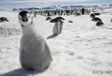 企鹅是什么动物类型(企鹅是什么地方的特有动
