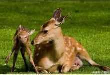 鹿胎膏的功效与作用有哪些!