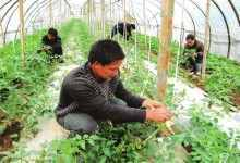 冬季种什么赚钱(种植户冬天可以种植什么产品