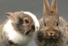 怎么养兔子繁殖最快(兔子为什么不能养三年)