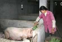 在农村想赚钱干什么比较好(在乡下做点什么能