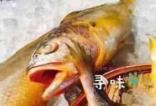 海里有什么鱼可以吃?五种可以吃的海鱼
