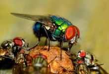 苍蝇怕什么气味?除苍蝇有妙招