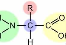 氨基酸是什么?氨基酸最新的功能是什么