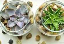 多肉植物怎么养?在家里养护多肉植物需要注意的10个技巧