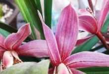 杨兰花怎么种植?兰花怎么种植,后期如何养护