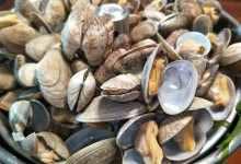洗蛤蜊时,外行才直接放盐,试试这样做,蛤蜊狂吐沙