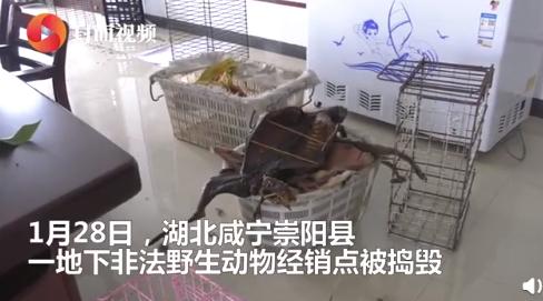 广州一市场仍在偷卖野生动物怎么回事 现场照片曝光太恐怖了