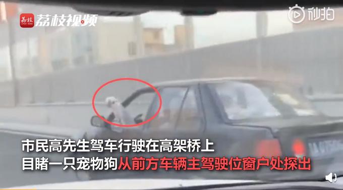 司机开车时边撸狗边看书怎么回事 详细经过现场图网友炸了