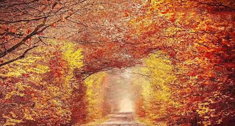 描写秋天的诗句 描写秋天景色优美句子