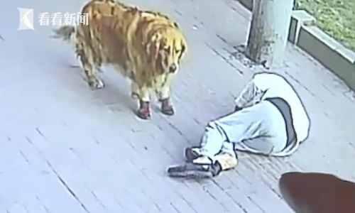 遛狗老人被高空坠猫砸晕怎么回事?现场图片详情曝光真天降横