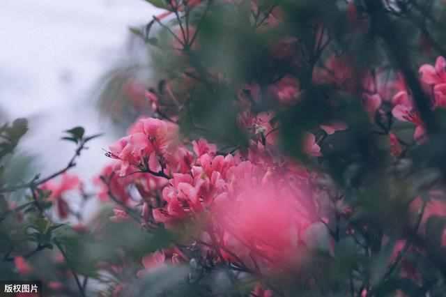 雾里看花是什么意思?雾里看花暗示了什么