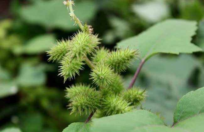 植物靠什么传播种子?植物靠什么传播种子举例