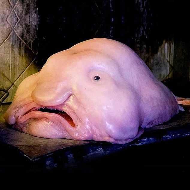 水滴鱼能吃吗?水滴鱼有毒吗