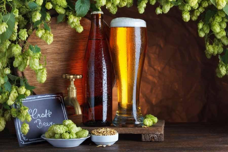 啤酒花是什么?啤酒花的功效与作用