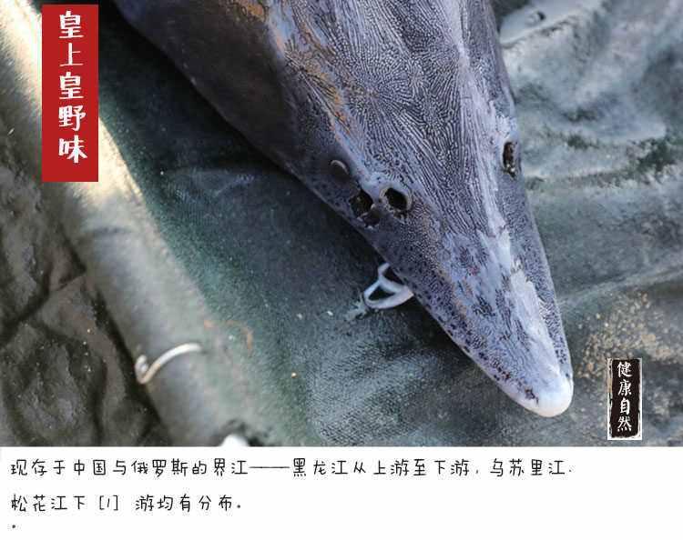 黑龙江鲟鳇鱼价格,黑龙江鲟鳇鱼多少钱一斤!