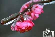 中国国花有哪些花(简介这10大国花及象征的意义)