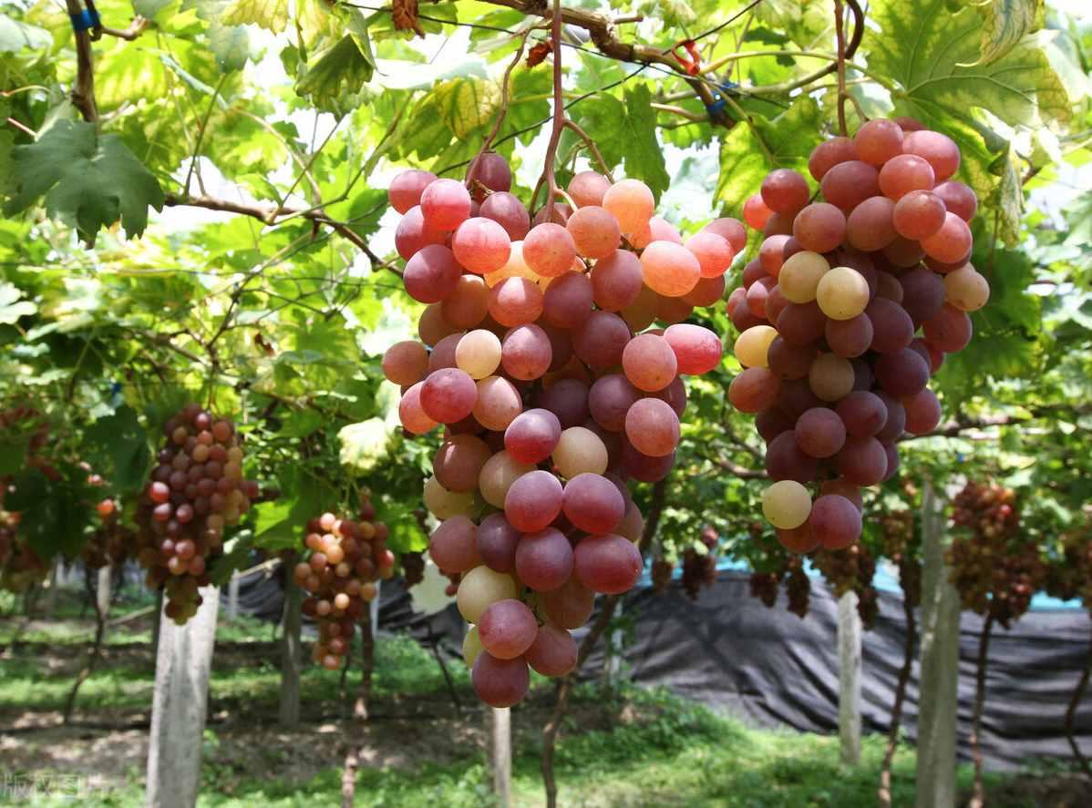 种植业最有前景的产业是什么?老农民推荐6种植物,赚钱又稳又快