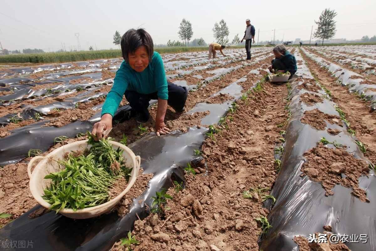 农业种植致富项目有哪些?什么项目前景好挣钱多
