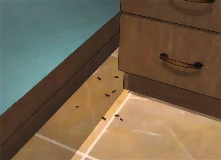 家里有老鼠太烦?3个方法,教你如何自然地驱逐老鼠