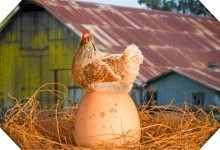 现在在农村做什么养殖比较好(稳赚不赔的4个农村养殖项目)