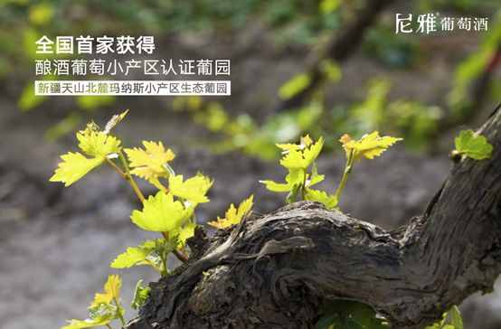尼雅葡萄酒德国获奖,新疆葡萄酒频获国际大奖的秘密在哪里?
