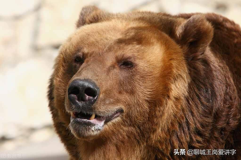 """说文解字:""""魊魆魋魌""""你都认识吗?叹服中国古文化"""